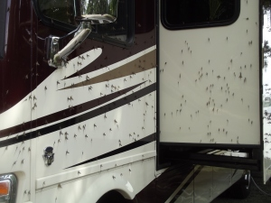 Thousands of Lake or May Flies attached to us and our RV. Yuk!