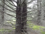 The giant arms of the trees reached out to us.