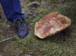 This is Tom's size 12 foot next to a mushroom! They were everywhere!