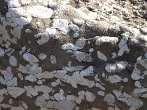 Fantastic fossils!