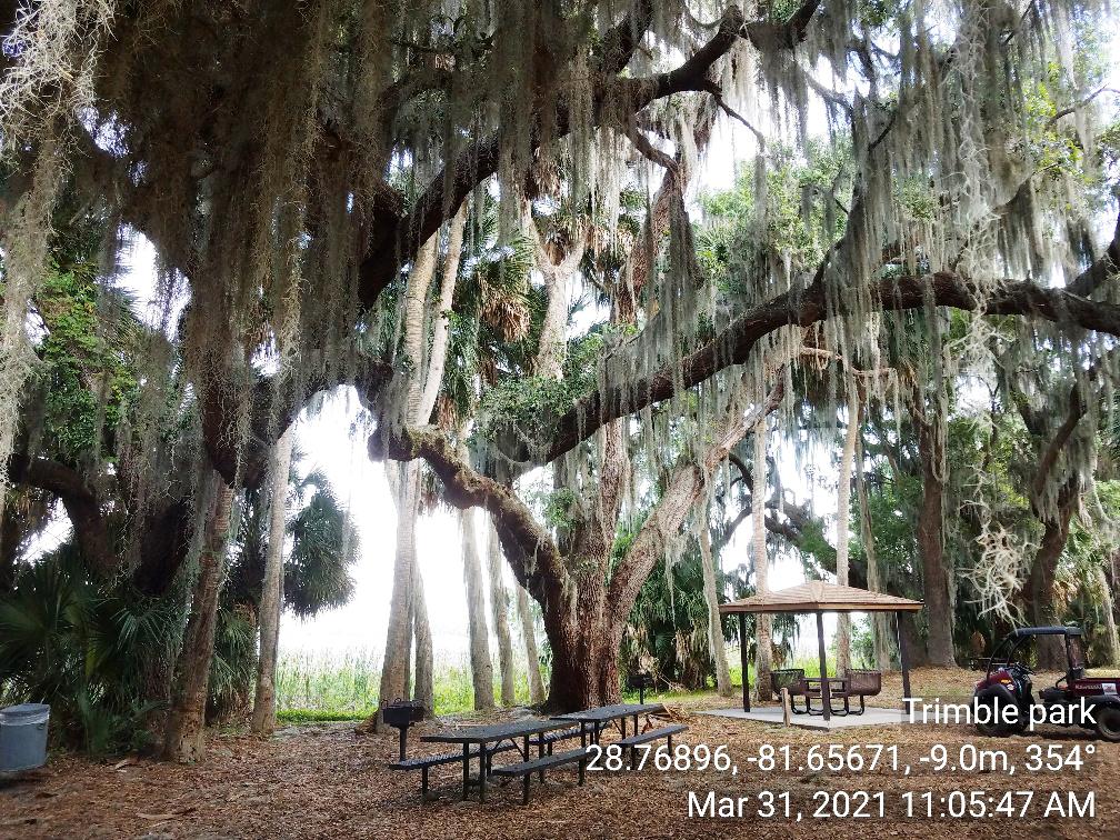Trimble Park Tree #1